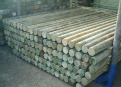 Rolete de Pinus (2)